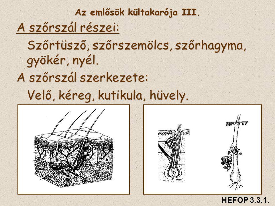 Az emlősök kültakarója III. A szőrszál részei: Szőrtüsző, szőrszemölcs, szőrhagyma, gyökér, nyél. A szőrszál szerkezete: Velő, kéreg, kutikula, hüvely