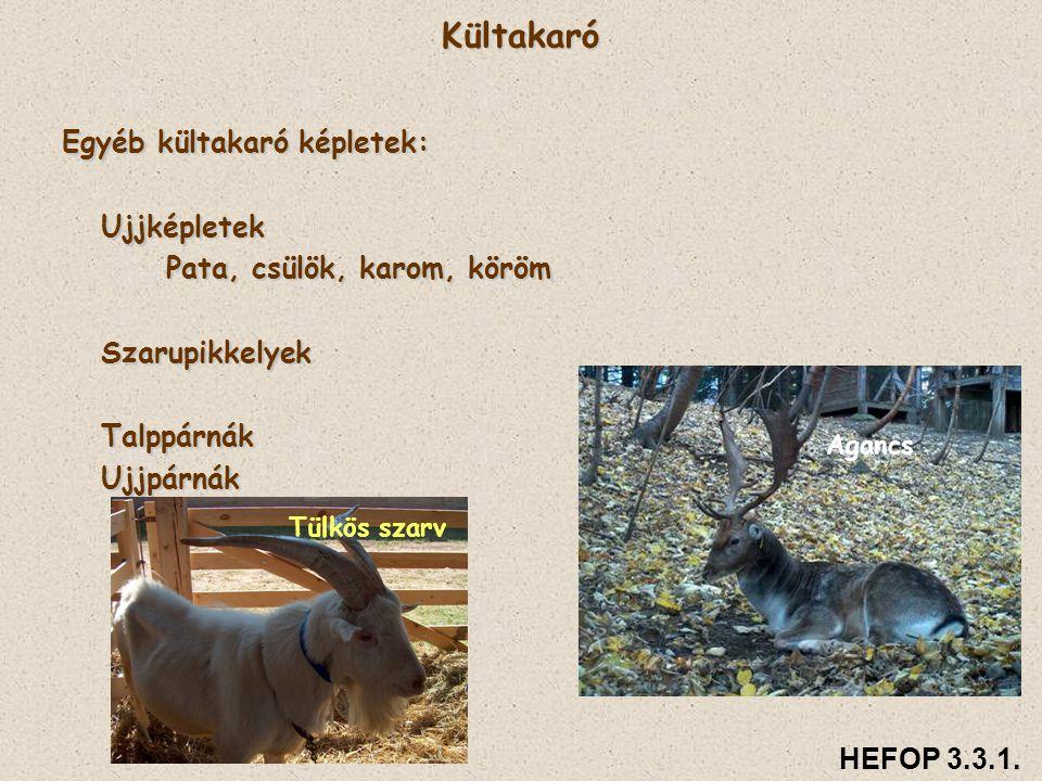 HEFOP 3.3.1.Az előadás anyagát készítette: Dr. habil.