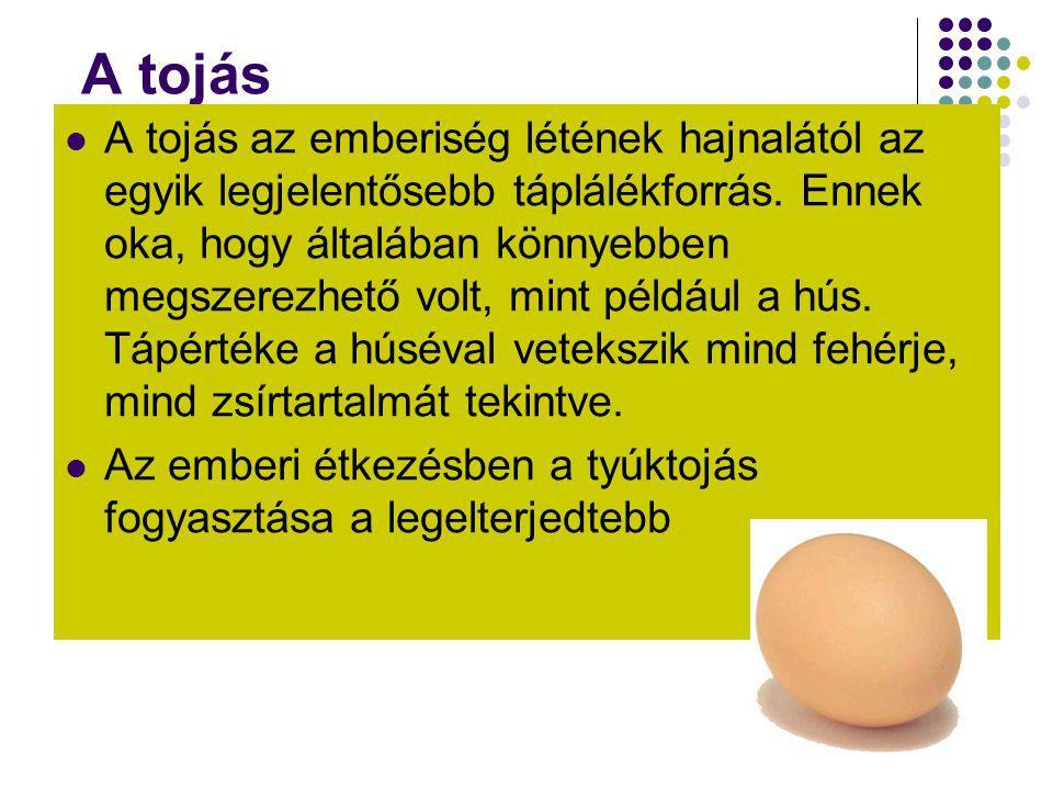 A tojás  A tojás az emberiség létének hajnalától az egyik legjelentősebb táplálékforrás. Ennek oka, hogy általában könnyebben megszerezhető volt, min