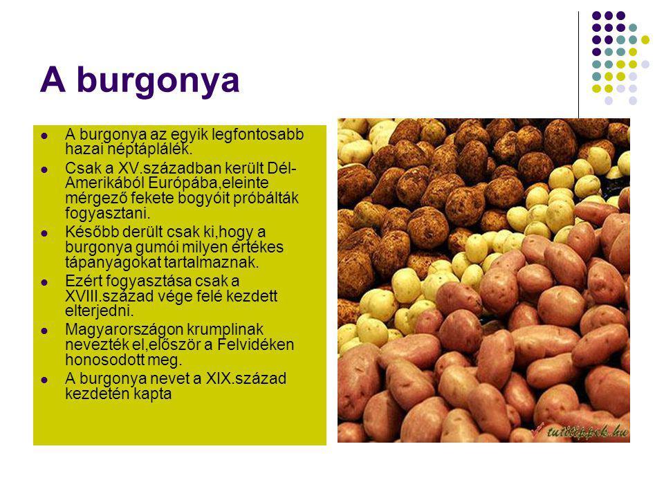 A burgonya  A burgonya az egyik legfontosabb hazai néptáplálék.  Csak a XV.században került Dél- Amerikából Európába,eleinte mérgező fekete bogyóit