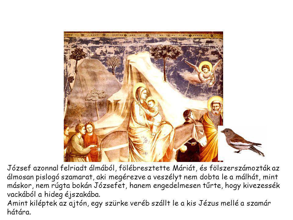 József azonnal felriadt álmából, fölébresztette Máriát, és fölszerszámozták az álmosan pislogó szamarat, aki megérezve a veszélyt nem dobta le a málhát, mint máskor, nem rúgta bokán Józsefet, hanem engedelmesen tűrte, hogy kivezessék vackából a hideg éjszakába.