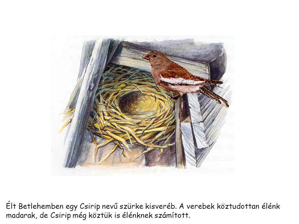 Élt Betlehemben egy Csirip nevű szürke kisveréb.