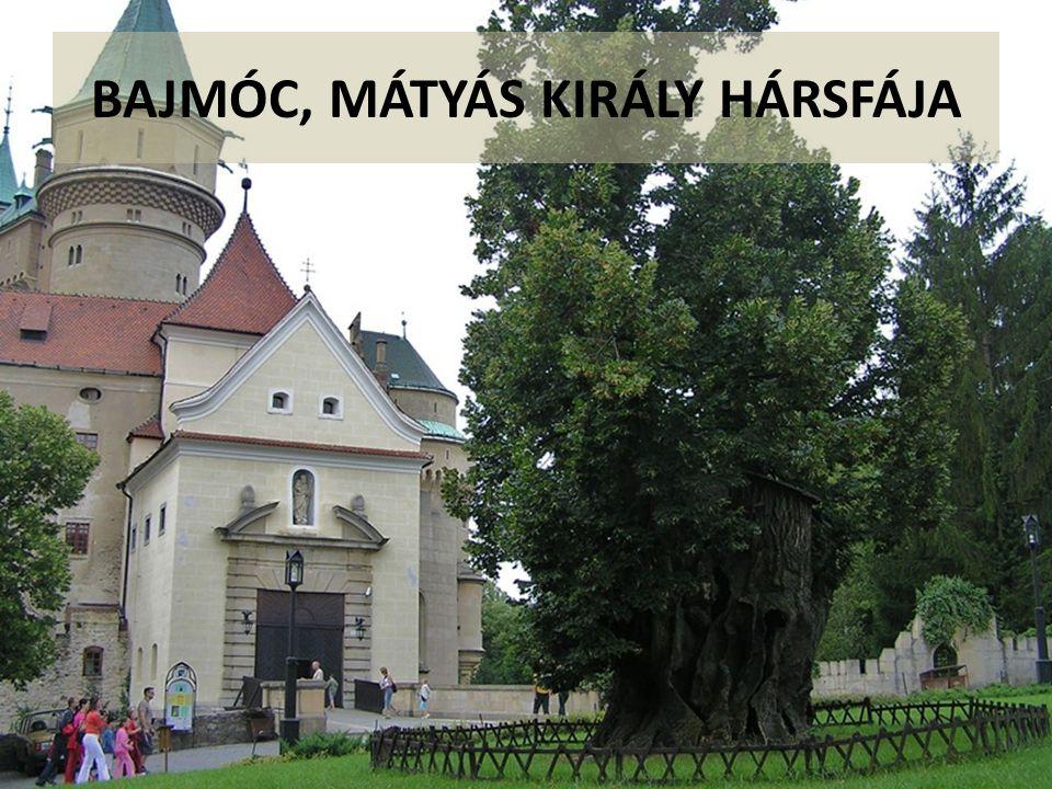 BAJMÓC, MÁTYÁS KIRÁLY HÁRSFÁJA