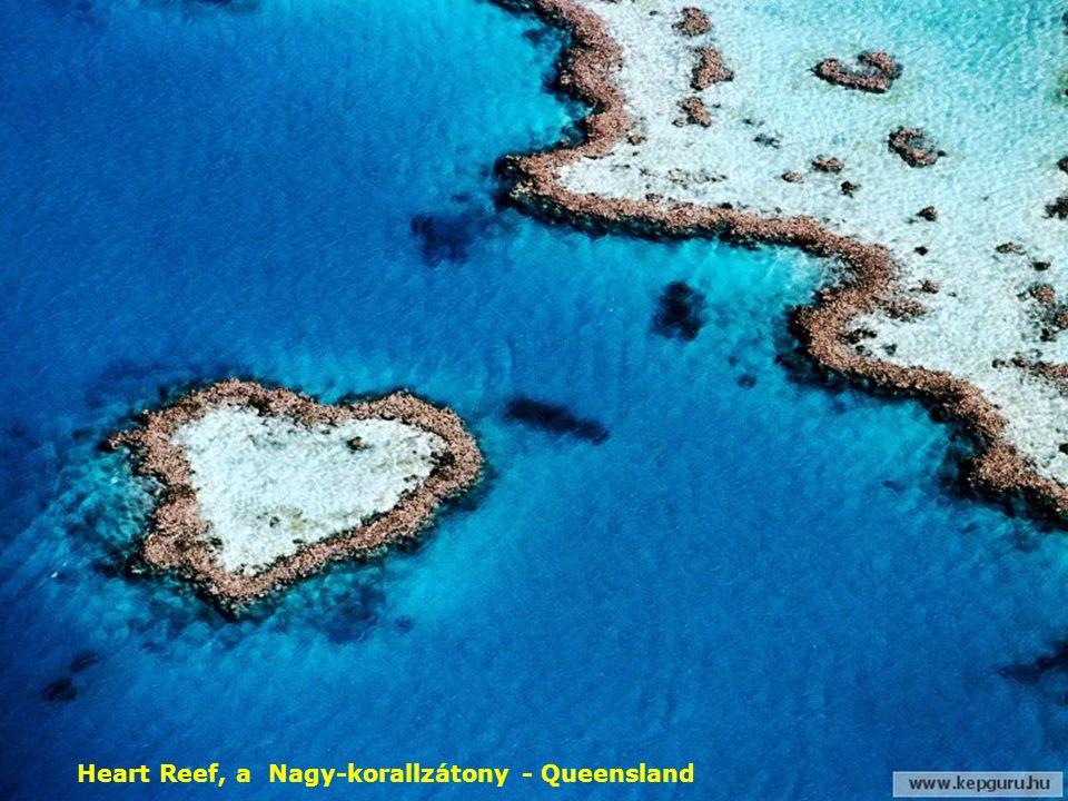 Kék Linckia tengeri csillag, Nagy-korallzátony