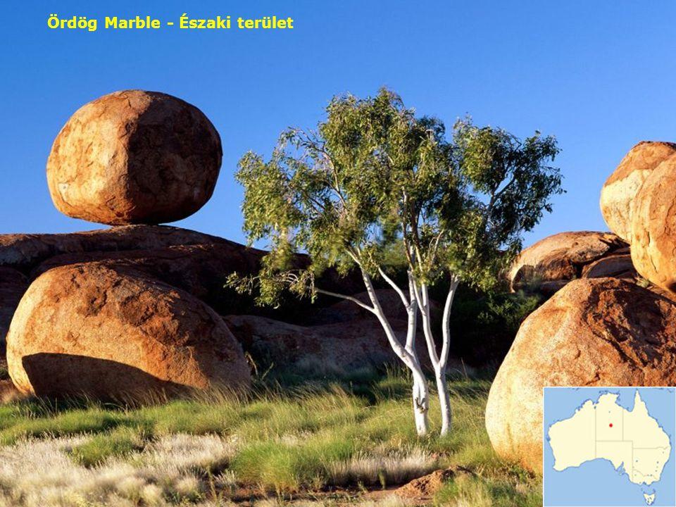 Spinifex - növényzet Outback-on