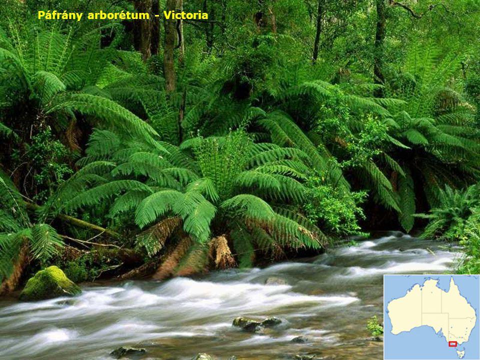 Páfrány arborétum - Victoria