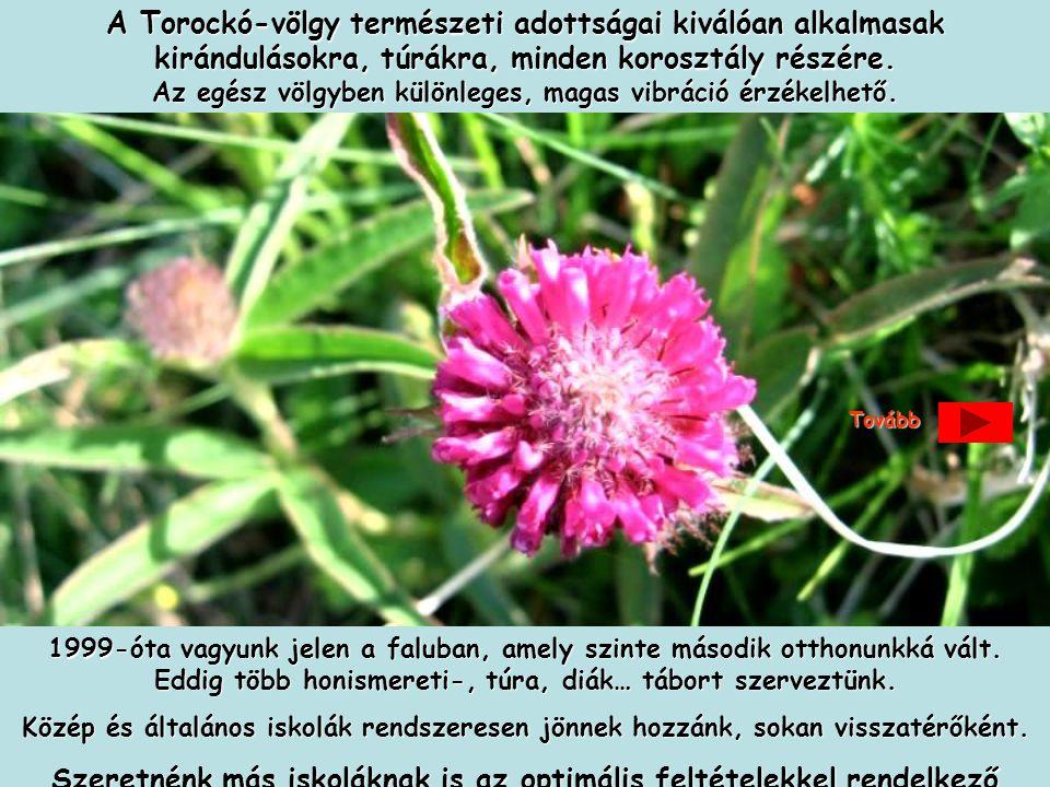 Szeretettel várjuk jelentkezését, érdeklődését: Kovács Zoltán pedagógus, kulturális szervező: 0630/257-54-33, e-mail: info@torockoegyesulet.hu web oldal: www.torockoegyesulet.hu info@torockoegyesulet.huwww.torockoegyesulet.huinfo@torockoegyesulet.huwww.torockoegyesulet.hu Szeretettel várjuk jelentkezését, érdeklődését: Kovács Zoltán pedagógus, kulturális szervező: 0630/257-54-33, e-mail: info@torockoegyesulet.hu web oldal: www.torockoegyesulet.hu info@torockoegyesulet.huwww.torockoegyesulet.huinfo@torockoegyesulet.huwww.torockoegyesulet.huTovább Áraink önköltségesek, például 4 napos program 29 000 Ft/fő, amely utazást, bőséges félpanziót,programokat, programvezetést foglal magába, szervezőknek ingyenes.