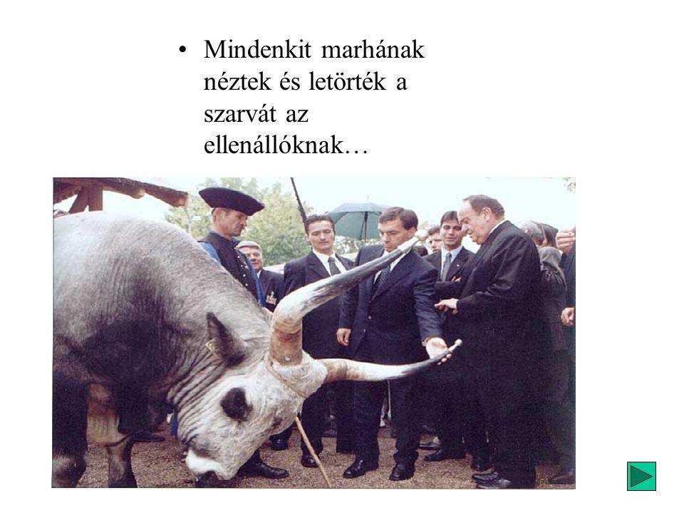 •Mindenkit marhának néztek és letörték a szarvát az ellenállóknak…