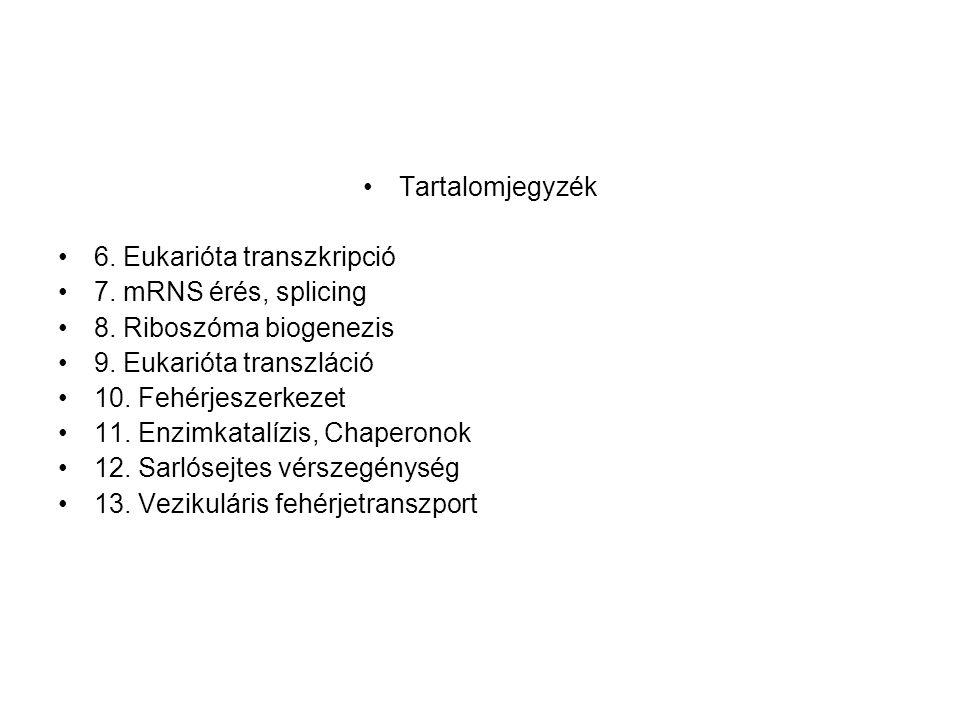 •Tartalomjegyzék •6. Eukarióta transzkripció •7. mRNS érés, splicing •8. Riboszóma biogenezis •9. Eukarióta transzláció •10. Fehérjeszerkezet •11. Enz