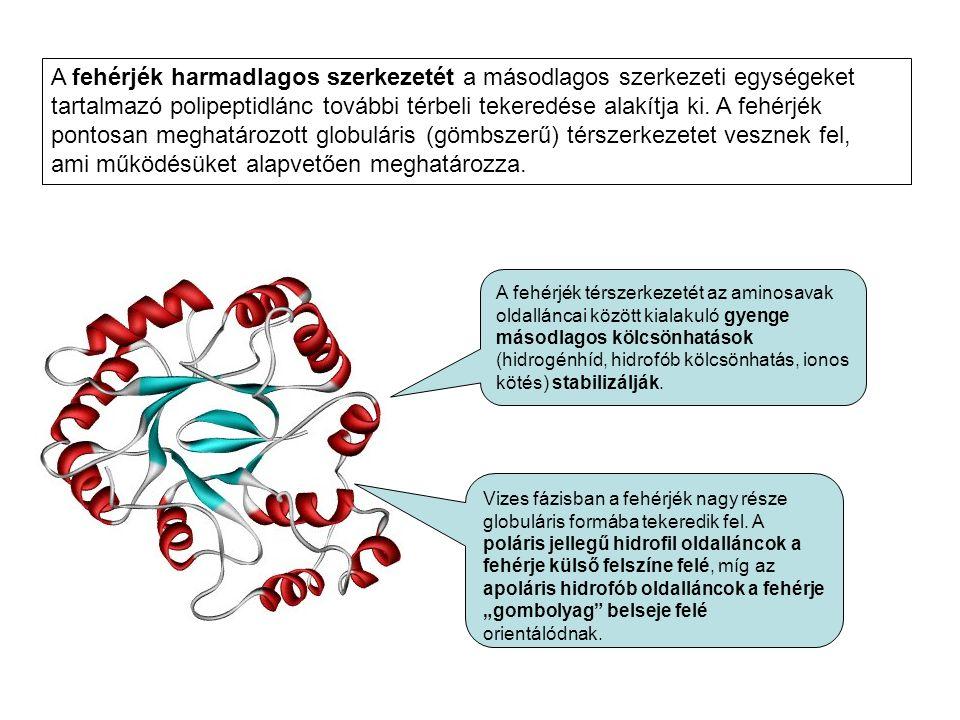 A fehérjék harmadlagos szerkezetét a másodlagos szerkezeti egységeket tartalmazó polipeptidlánc további térbeli tekeredése alakítja ki. A fehérjék pon