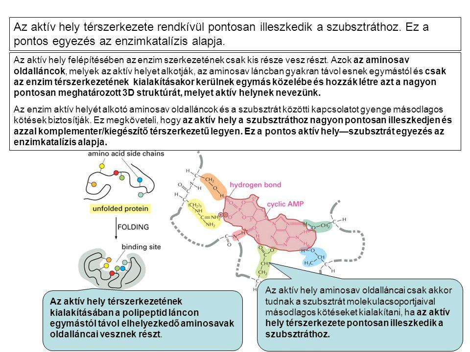 Az aktív hely felépítésében az enzim szerkezetének csak kis része vesz részt. Azok az aminosav oldalláncok, melyek az aktív helyet alkotják, az aminos
