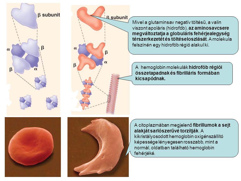 Mivel a glutaminsav negatív töltésű, a valin viszont apoláris (hidrofób), az aminosavcsere megváltoztatja a globuláris fehérjealegység térszerkezetét