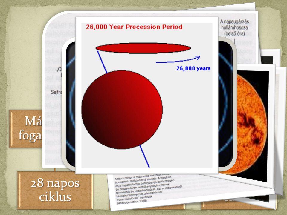 NAP 28 napos ciklus 187 éves ciklus 25.625 éves ciklus Mágneses mezők, fogantatás, genetika