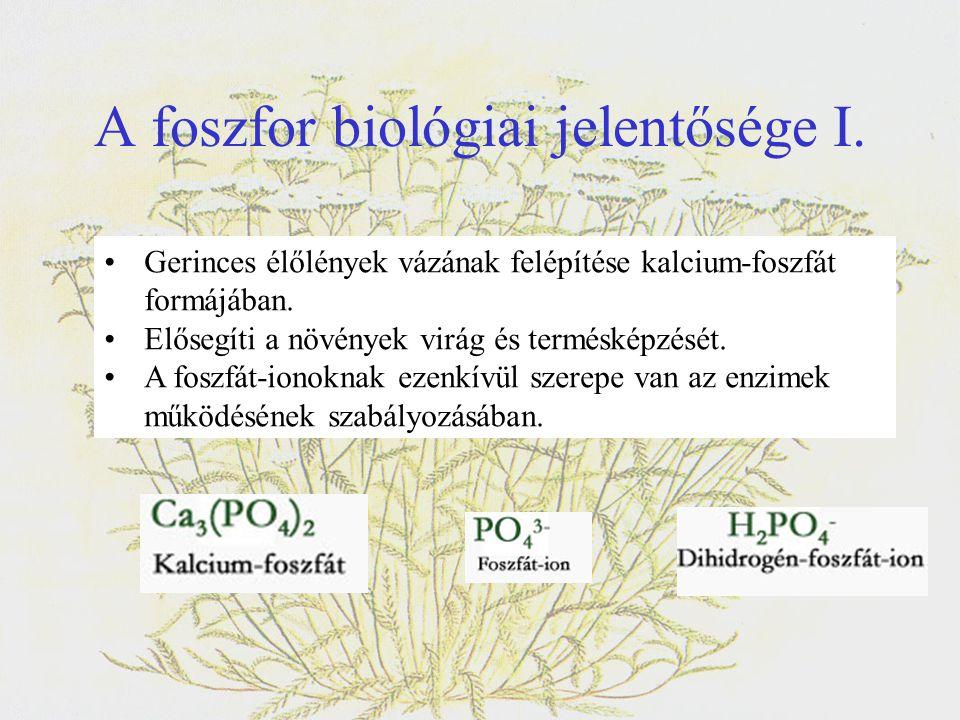 A foszfor biológiai jelentősége I. •Gerinces élőlények vázának felépítése kalcium-foszfát formájában. •Elősegíti a növények virág és termésképzését. •