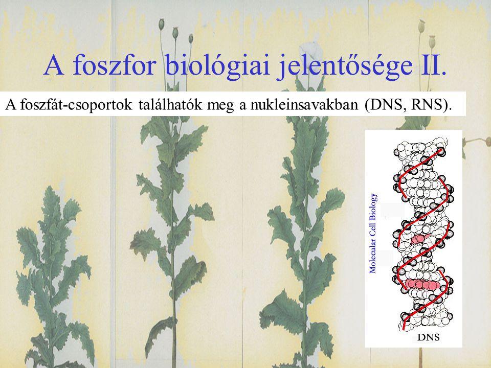 A foszfor biológiai jelentősége II. A foszfát-csoportok találhatók meg a nukleinsavakban (DNS, RNS).