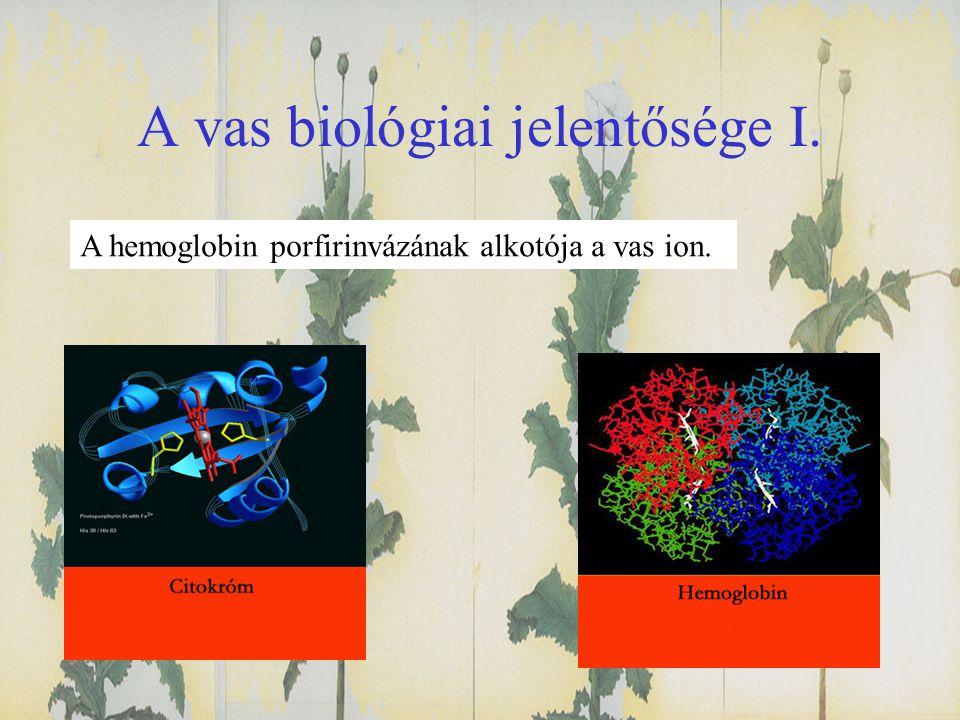 A vas biológiai jelentősége I. A hemoglobin porfirinvázának alkotója a vas ion.