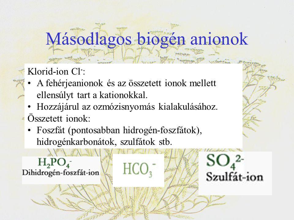 Másodlagos biogén anionok Klorid-ion Cl - : •A fehérjeanionok és az összetett ionok mellett ellensúlyt tart a kationokkal. •Hozzájárul az ozmózisnyomá