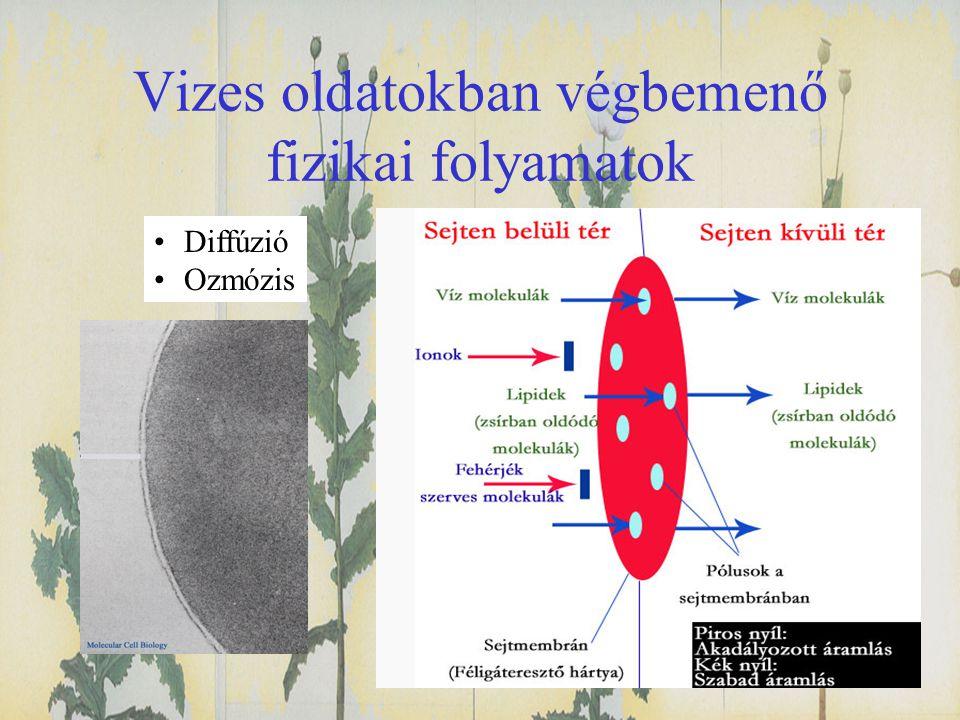 Vizes oldatokban végbemenő fizikai folyamatok •Diffúzió •Ozmózis