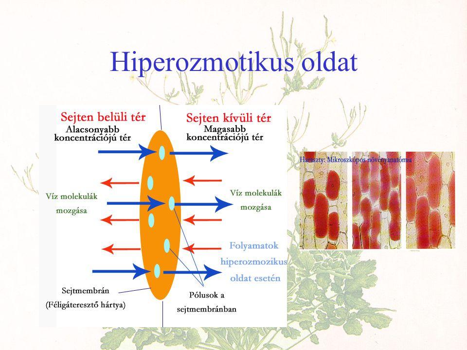 Hiperozmotikus oldat