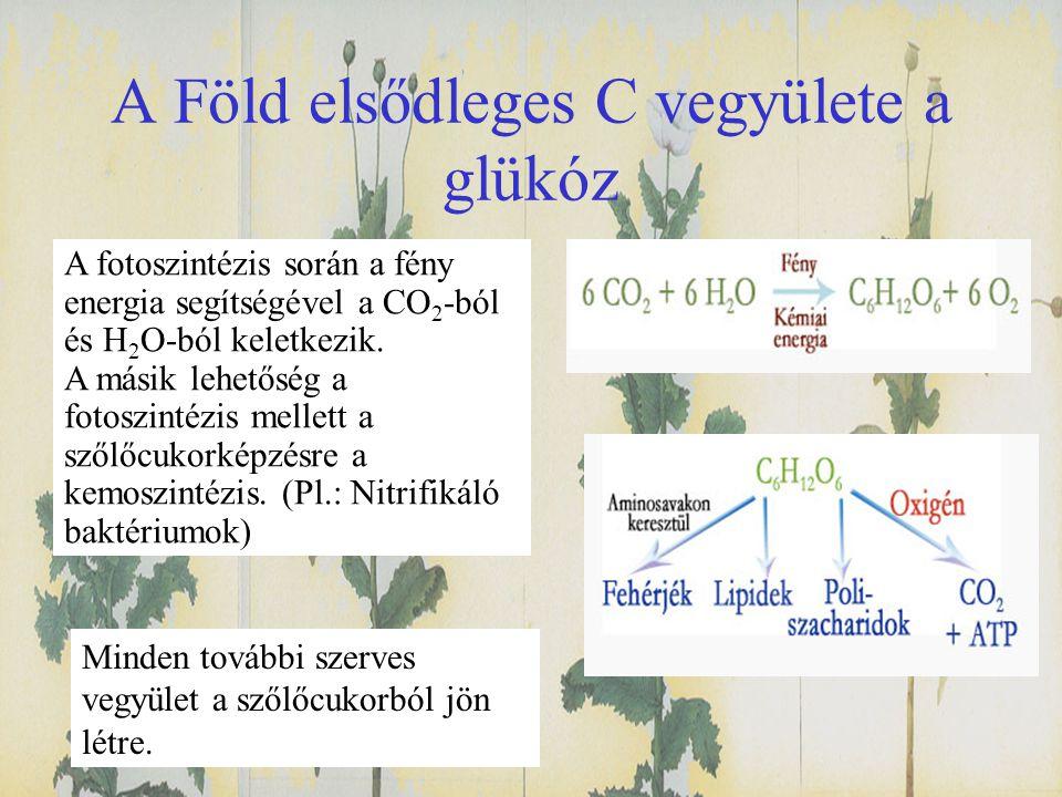 A Föld elsődleges C vegyülete a glükóz A fotoszintézis során a fény energia segítségével a CO 2 -ból és H 2 O-ból keletkezik. A másik lehetőség a foto