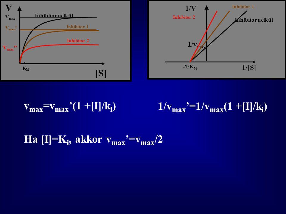 [S] V Inhibitor nélkül Inhibitor 1 Inhibitor 2 1/[S] 1/V 1/v max -1/K M Inhibitor nélkül Inhibitor 1 Inhibitor 2V max V max ' V max '' KMKM v max =v max '(1 +[I]/k i ) 1/v max '=1/v max (1 +[I]/k i ) Ha [I]=K i, akkor v max '=v max /2