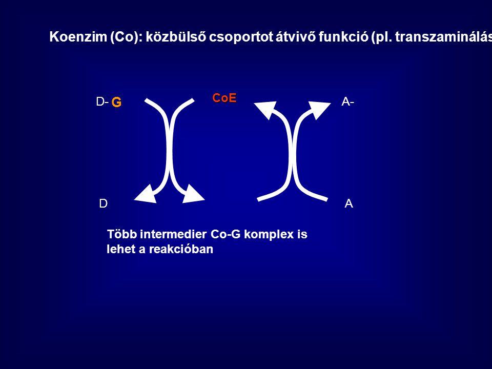 Koenzim (Co): közbülső csoportot átvivő funkció (pl.