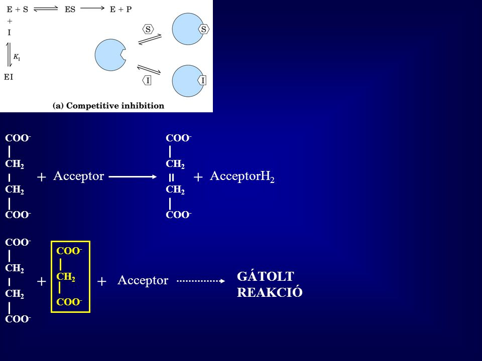 COO - CH 2 COO - + Acceptor COO - CH 2 COO - AcceptorH 2 + COO - CH 2 COO - + Acceptor COO - CH 2 COO - + GÁTOLT REAKCIÓ