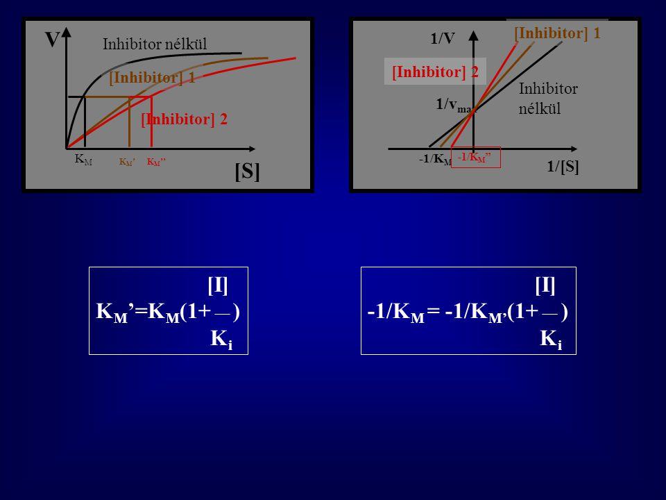 [S] V 1/[S] 1/V 1/v max -1/K M Inhibitor nélkül [Inhibitor] 2 [Inhibitor] 1 Inhibitor nélkül [Inhibitor] 2 K M '' KMKM KM'KM' -1/K M '' [I] K M '=K M (1+ __ ) K i [I] -1/K M = -1/K M' (1+ __ ) K i