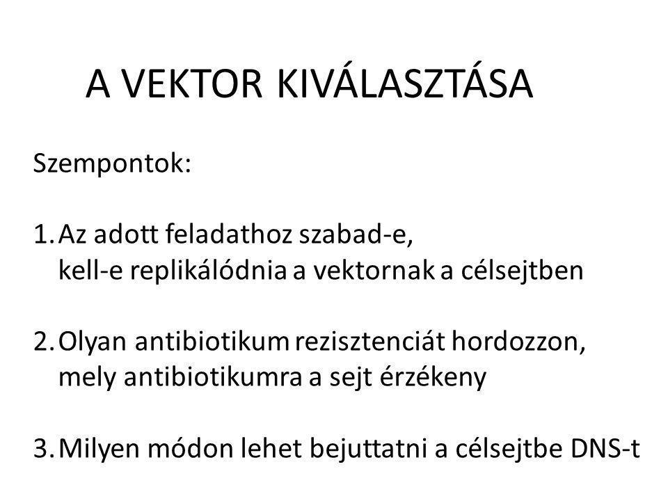 A VEKTOR KIVÁLASZTÁSA Szempontok: 1.Az adott feladathoz szabad-e, kell-e replikálódnia a vektornak a célsejtben 2.Olyan antibiotikum rezisztenciát hor