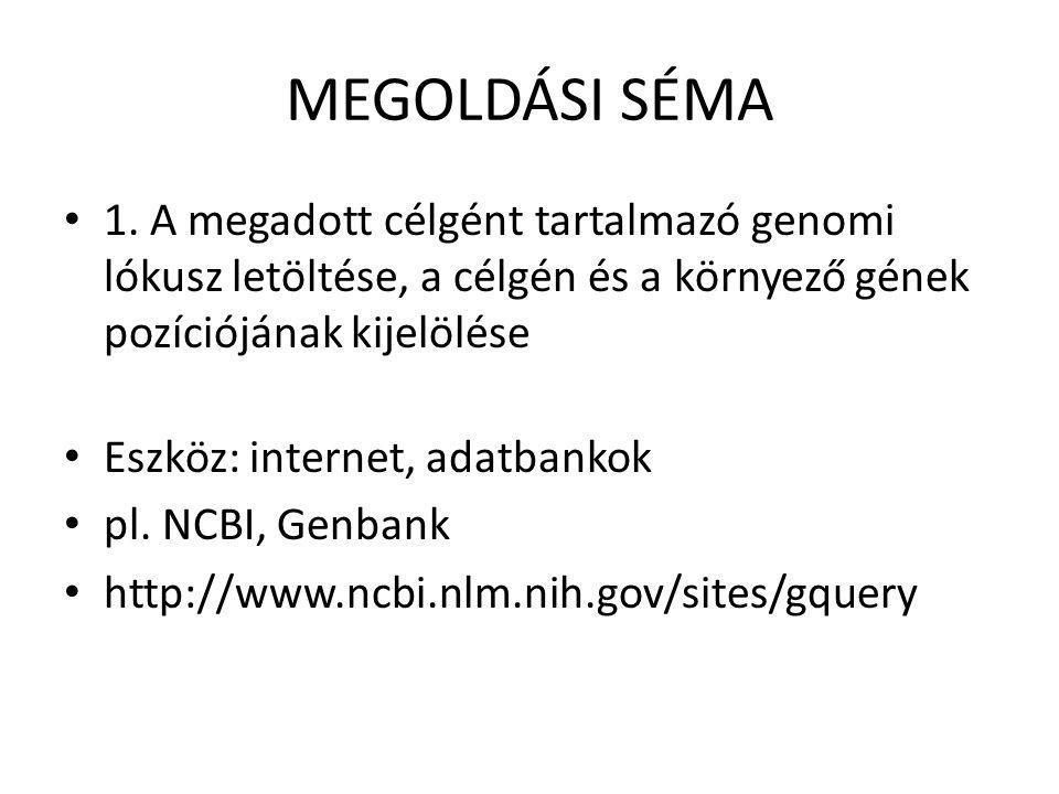 MEGOLDÁSI SÉMA • 1. A megadott célgént tartalmazó genomi lókusz letöltése, a célgén és a környező gének pozíciójának kijelölése • Eszköz: internet, ad