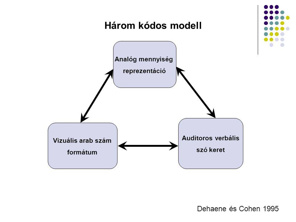 Analóg mennyiség reprezentáció Vizuális arab szám formátum Auditoros verbális szó keret Dehaene és Cohen 1995 Három kódos modell