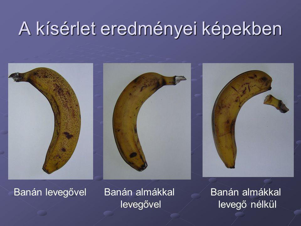 A kísérlet eredményei képekben Banán levegővelBanán almákkal levegő nélkül Banán almákkal levegővel