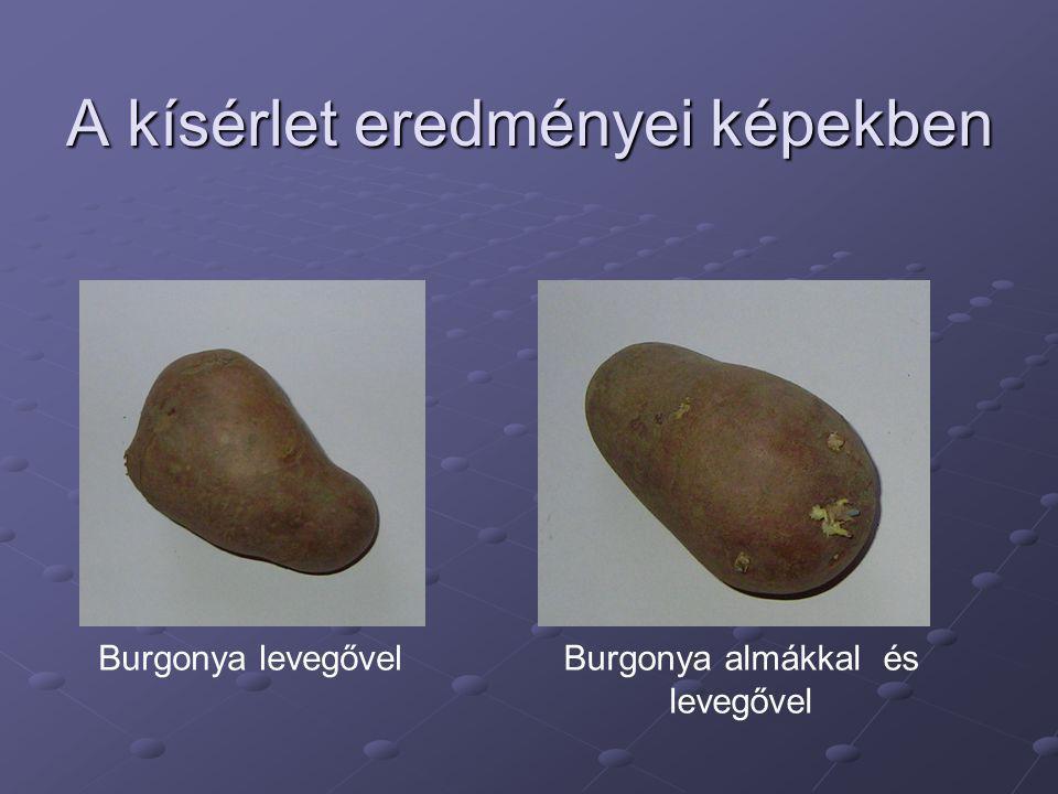 A kísérlet eredményei képekben Burgonya levegővelBurgonya almákkal és levegővel