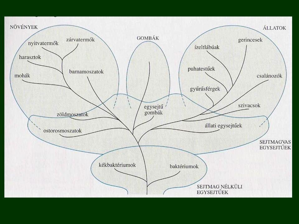 Szaporodás: petével, átalakulás nélküli fejlődés Táplálkozás: ragadozók vagy élősködők testen kívül megkezdik az emésztést Tanult fajok: koronás keresztespók ( pókok ) közönséges madárpók kullancs ( atkák) ( vastagfarkú skorpió )