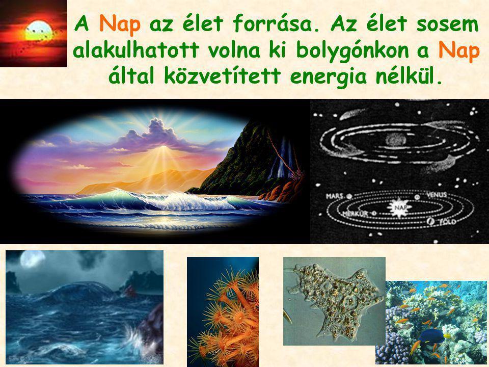 A Nap az élet forrása. Az élet sosem alakulhatott volna ki bolygónkon a Nap által közvetített energia nélkül.