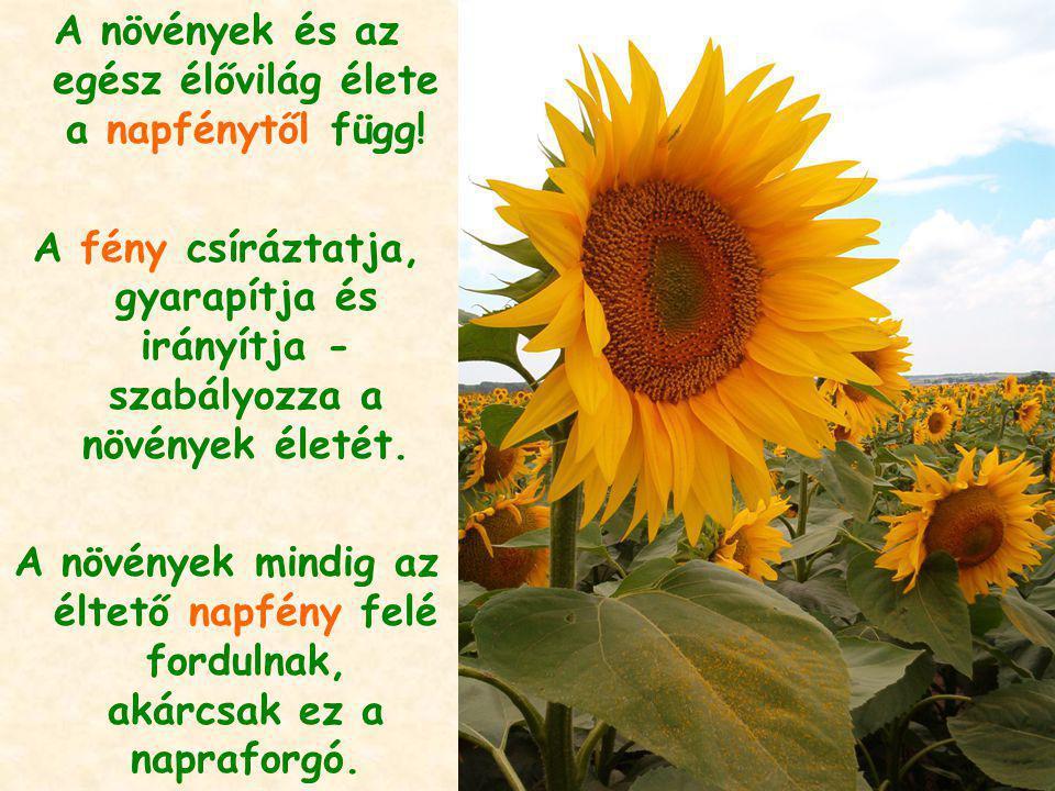 A növények és az egész élővilág élete a napfénytől függ! A fény csíráztatja, gyarapítja és irányítja - szabályozza a növények életét. A növények mindi