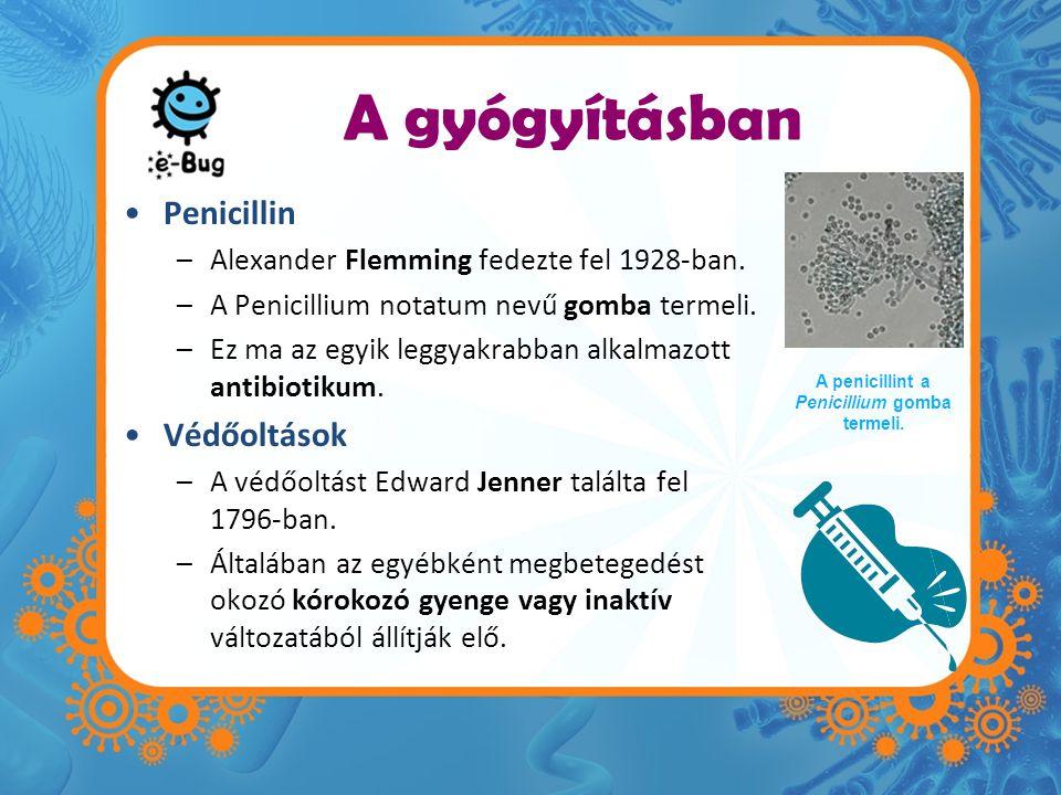 A gyógyításban •Penicillin –Alexander Flemming fedezte fel 1928-ban.