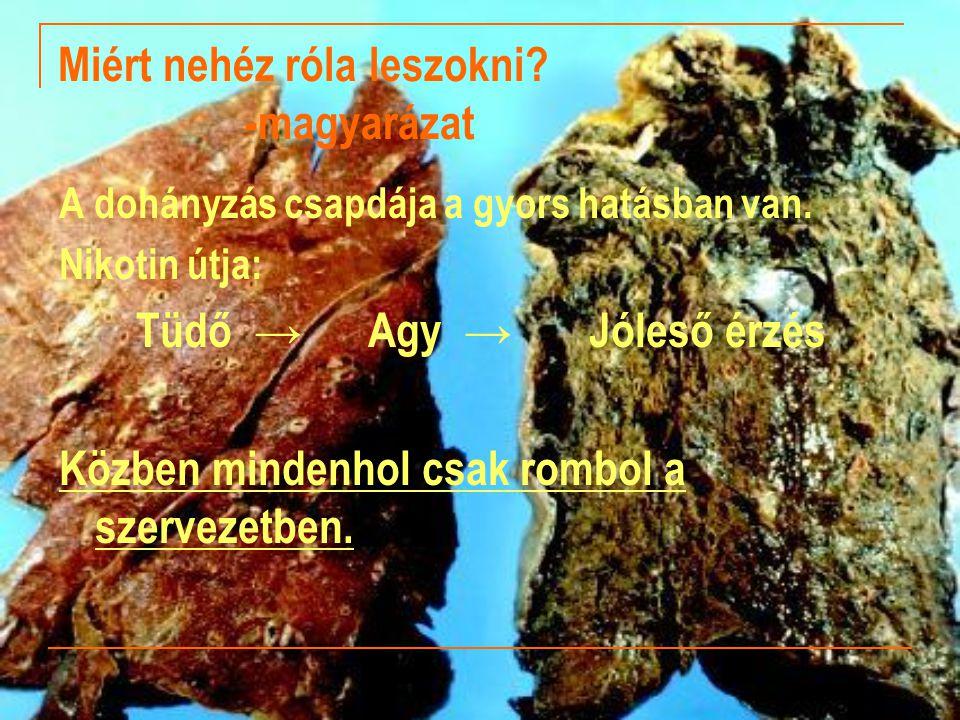 Miért nehéz róla leszokni? -magyarázat A dohányzás csapdája a gyors hatásban van. Nikotin útja: Tüdő → Agy → Jóleső érzés Közben mindenhol csak rombol