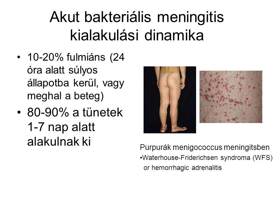 Akut bakteriális meningitis kialakulási dinamika •10-20% fulmiáns (24 óra alatt súlyos állapotba kerül, vagy meghal a beteg) •80-90% a tünetek 1-7 nap alatt alakulnak ki Purpurák menigococcus meningitsben •Waterhouse-Friderichsen syndroma (WFS) or hemorrhagic adrenalitis