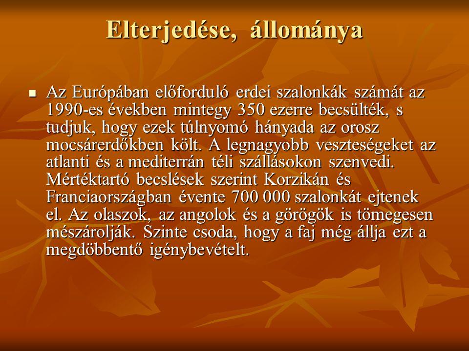 Védelme  A BirdLife International 2001-ben kiadott kiadványa az erdei szalonka európai költőállományát 10 millió pár felettinek becsüli.