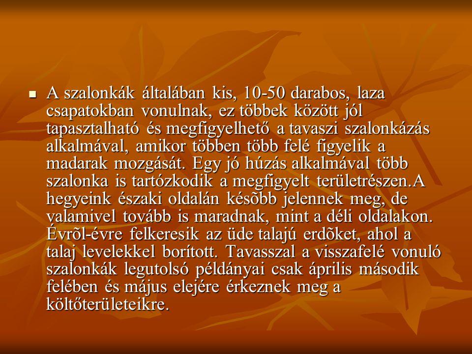  Az erdei szalonkák költő vagy születési helyeikről augusztus végétől - szeptember végéig tartó időszakban indulnak el, ekkor indulnak el az Ural vidékéről.