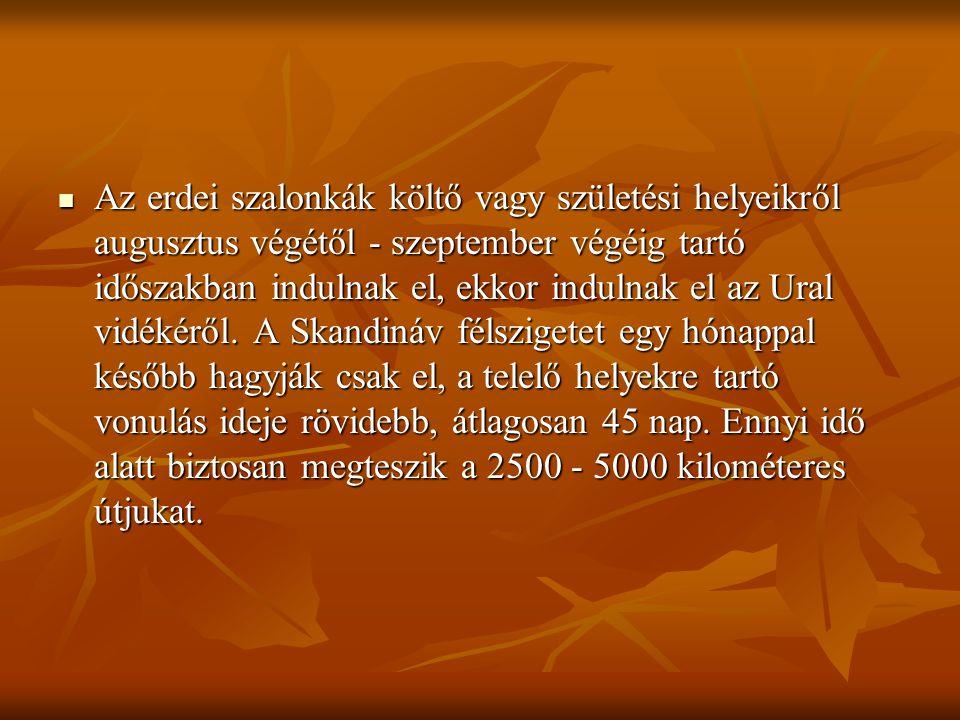  Az erdei szalonkák költő vagy születési helyeikről augusztus végétől - szeptember végéig tartó időszakban indulnak el, ekkor indulnak el az Ural vid