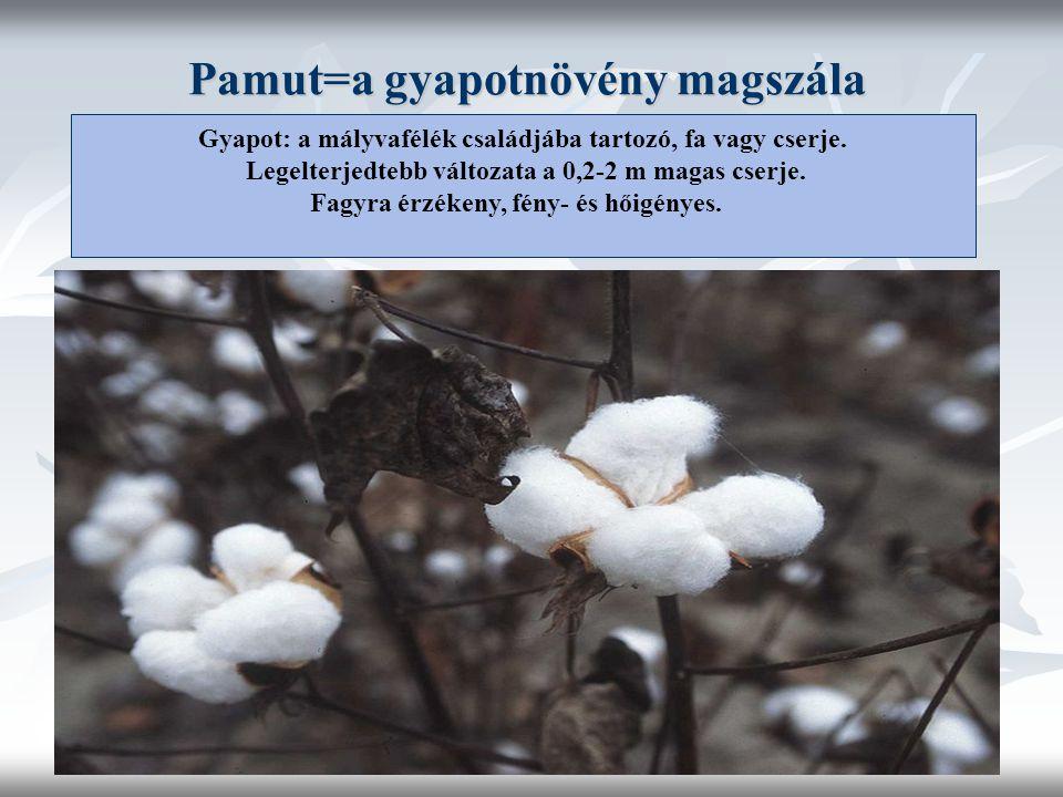 Pamut=a gyapotnövény magszála Gyapot: a mályvafélék családjába tartozó, fa vagy cserje.