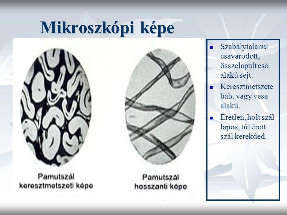 Mikroszkópi képe  Szabálytalanul csavarodott, összelapult cső alakú sejt.