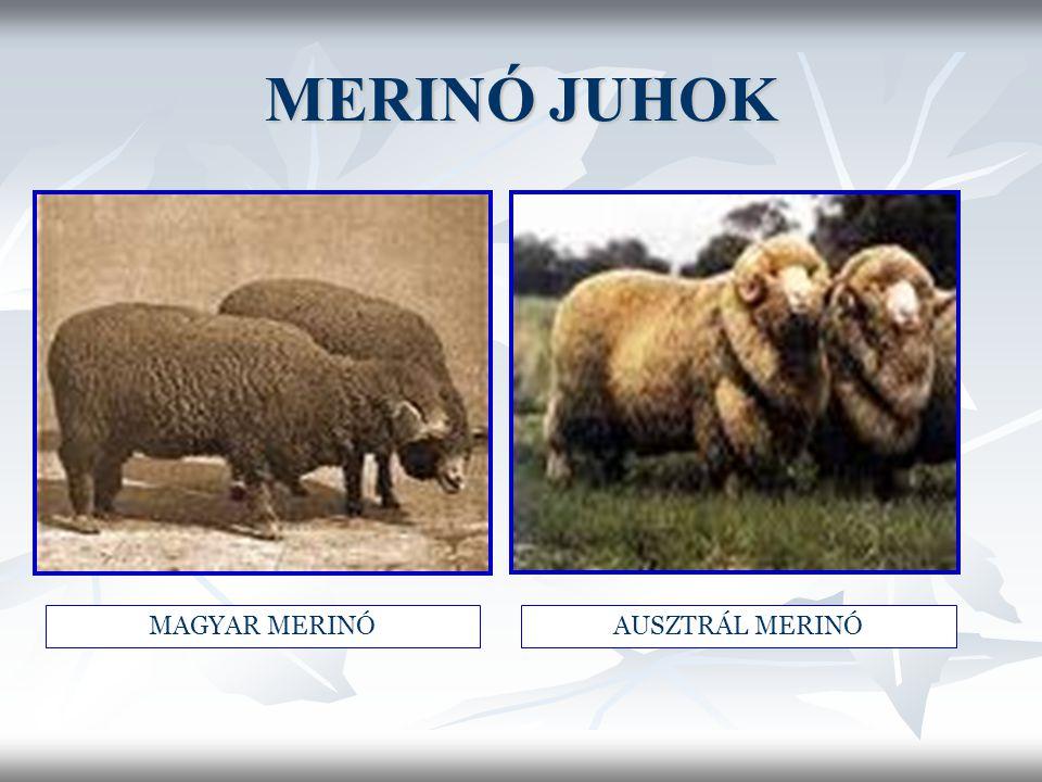 MERINÓ JUHOK MAGYAR MERINÓAUSZTRÁL MERINÓ