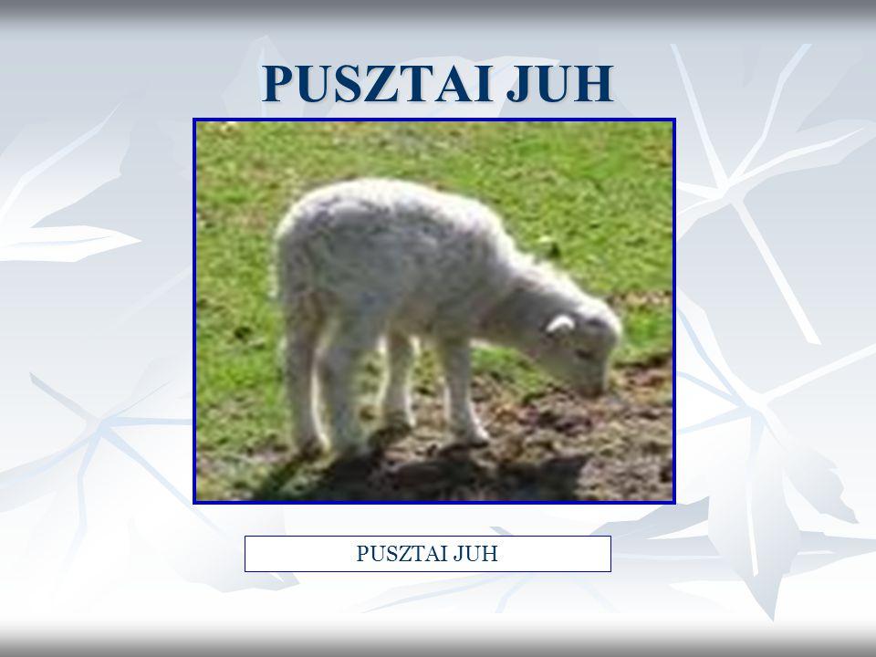 PUSZTAI JUH