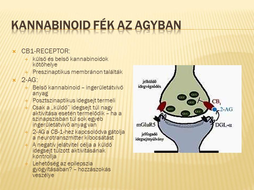  CB1-RECEPTOR:  külső és belső kannabinoidok kötőhelye  Preszinaptikus membránon találták  2-AG:  Belső kannabinoid – ingerületátvivő anyag  Pos
