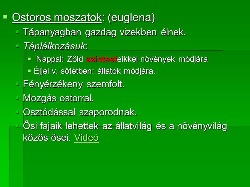  Ostoros moszatok: (euglena)  Tápanyagban gazdag vizekben élnek.  Táplálkozásuk:  Nappal: Zöld színtesteikkel növények módjára  Éjjel v. sötétben