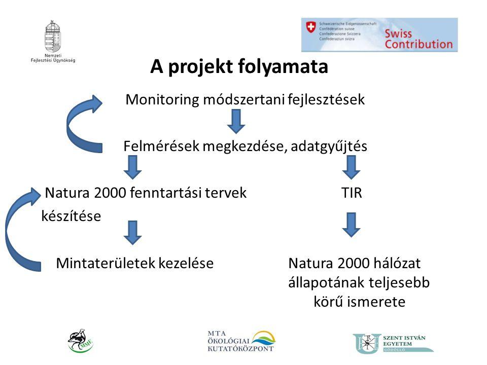 A módszertani fejlesztések és adatgyűjtés I.