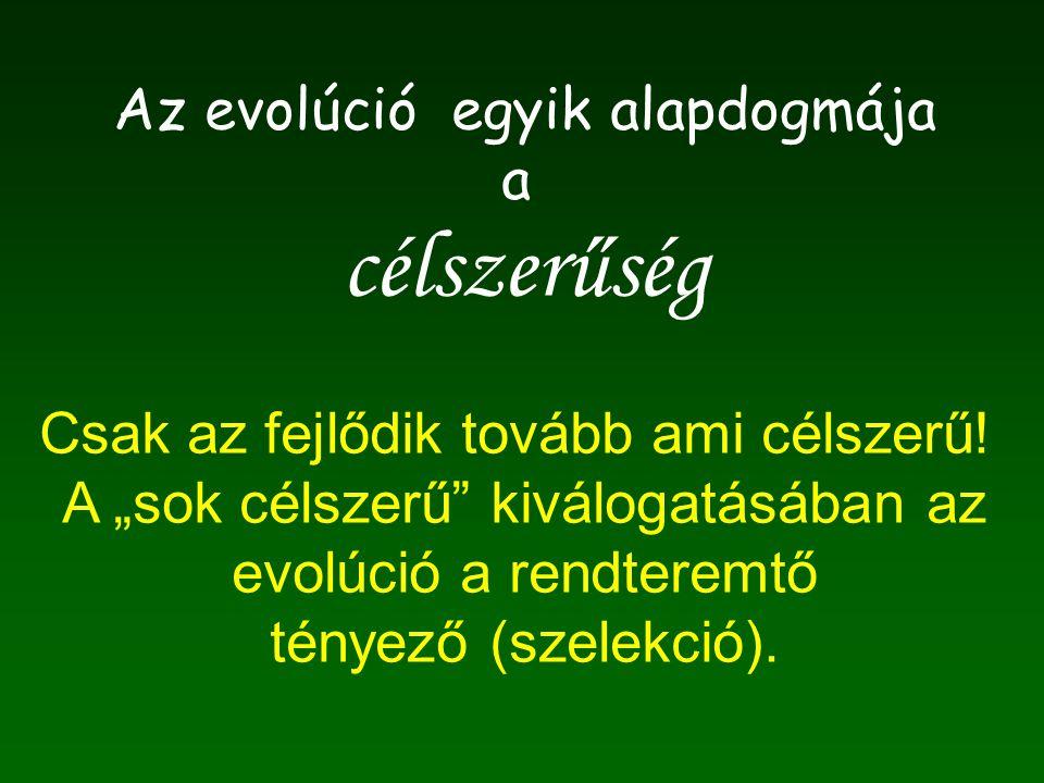 """Az evolúció egyik alapdogmája a célszerűség Csak az fejlődik tovább ami célszerű! A """"sok célszerű"""" kiválogatásában az evolúció a rendteremtő tényező ("""